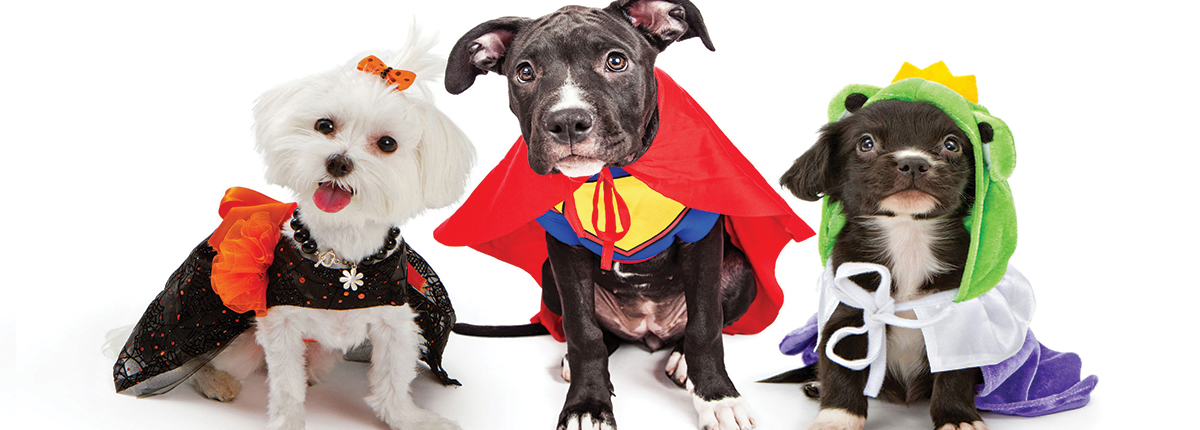 three dogs in costumes | Ponga's Pet Palace | Pet Grooming, Boarding, Doggie Day Care | Mandeville, Covington, Madisonville, Lacombe, LA