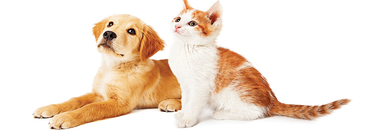 golden poppy and ginger and white kitten | Ponga's Pet Palace | Pet Grooming, Boarding, Doggie Day Care | Mandeville, Covington, Madisonville, Lacombe, LA