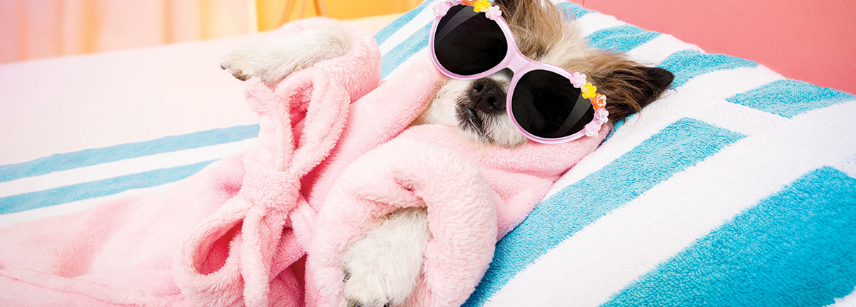 small dog relaxing on towel with sunglasses on   Ponga's Pet Palace Boarding, Grooming, Day Care